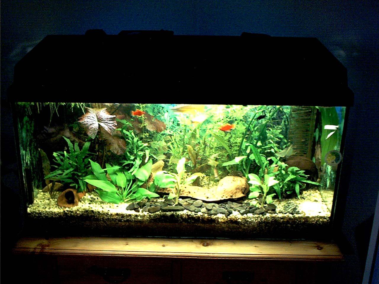 Fotogalerie der fische aus meinem aquarium for Aquarium fische im teich